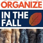 clean and organize in the fall