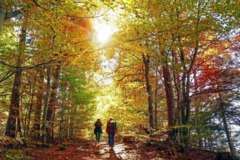 A Helpful Guide to Enjoying the Benefits of the Great Outdoors